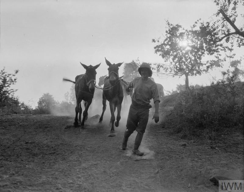 A driver taking mules to water, Salonika, September 1916.