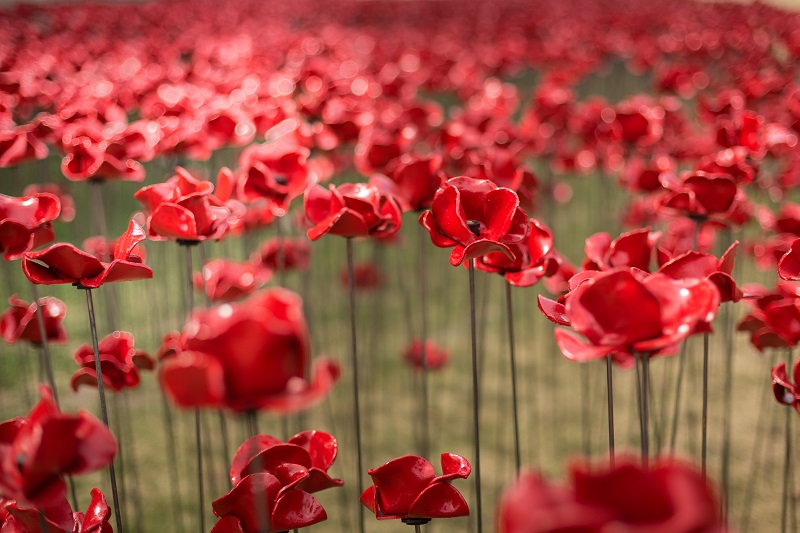 Poppies: Wave and Weeping Window Sculptures