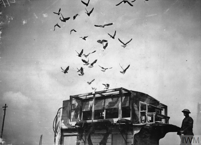 A former London double-decker bus (B.2125), camouflage painted, used as a travelling loft for carrier-pigeons. Pernes, 26 June 1918. Pigeons returning to the loft at the top of the bus.