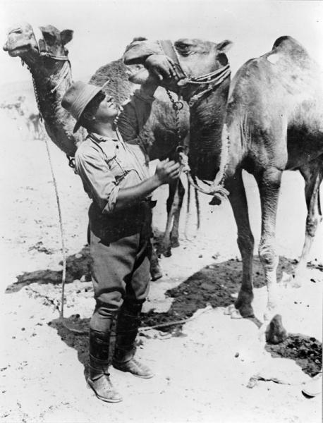 An Australian soldier demonstrating how docile his camel was by putting his wrist in its mouth, near Shellal, September 1917.