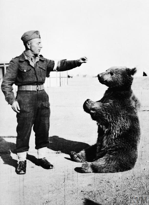 Wojtek (Voytek) the Polish 22nd Transport Artillery Support Company's (Army Service Corps, 2nd Polish Corps) pet bear. In the Middle East a soldier of the company feeds the young Wojtek.